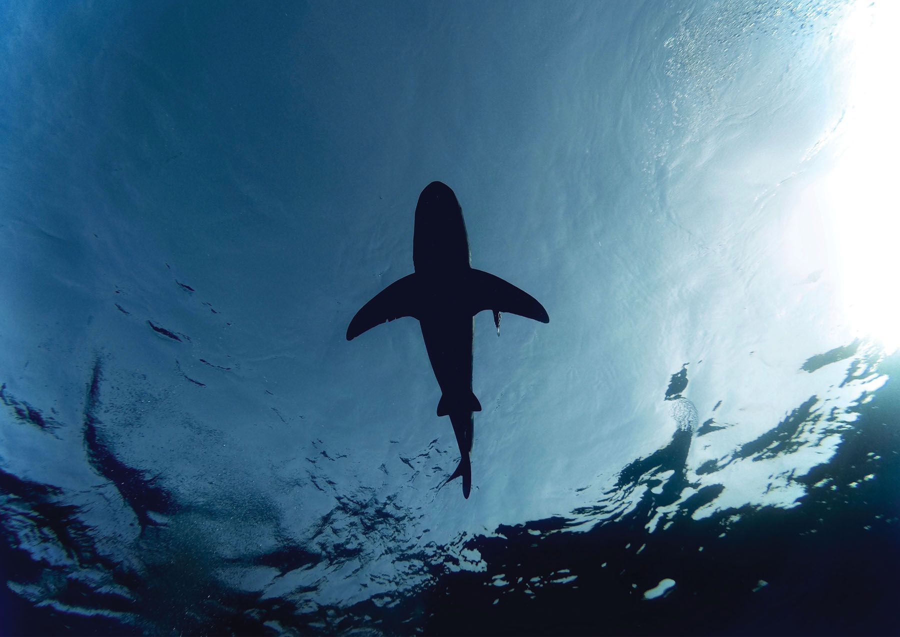 Sharks and Climate Change: A Podcast You Can Sink Your Teeth Into
